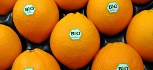 oranges-bio