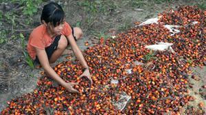 amnesty-huile-de-palme